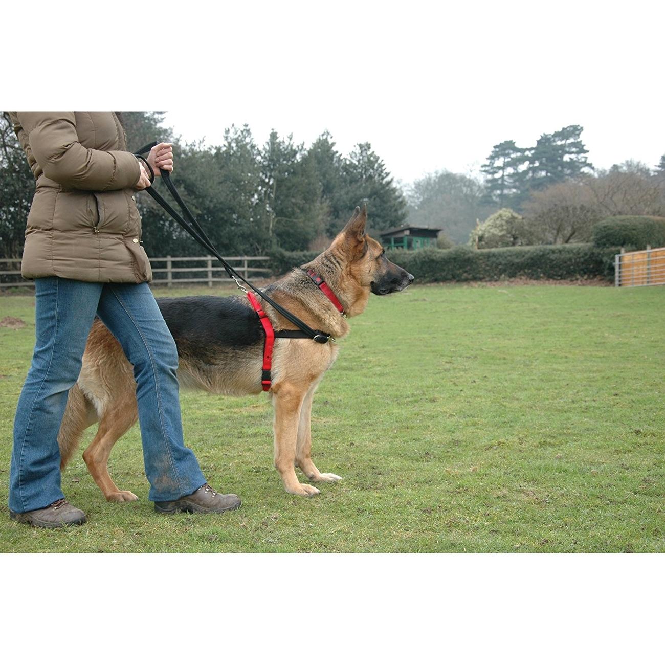 Company of Animals HALTI Harness Ausbildungsgeschirr für Hunde, Bild 10