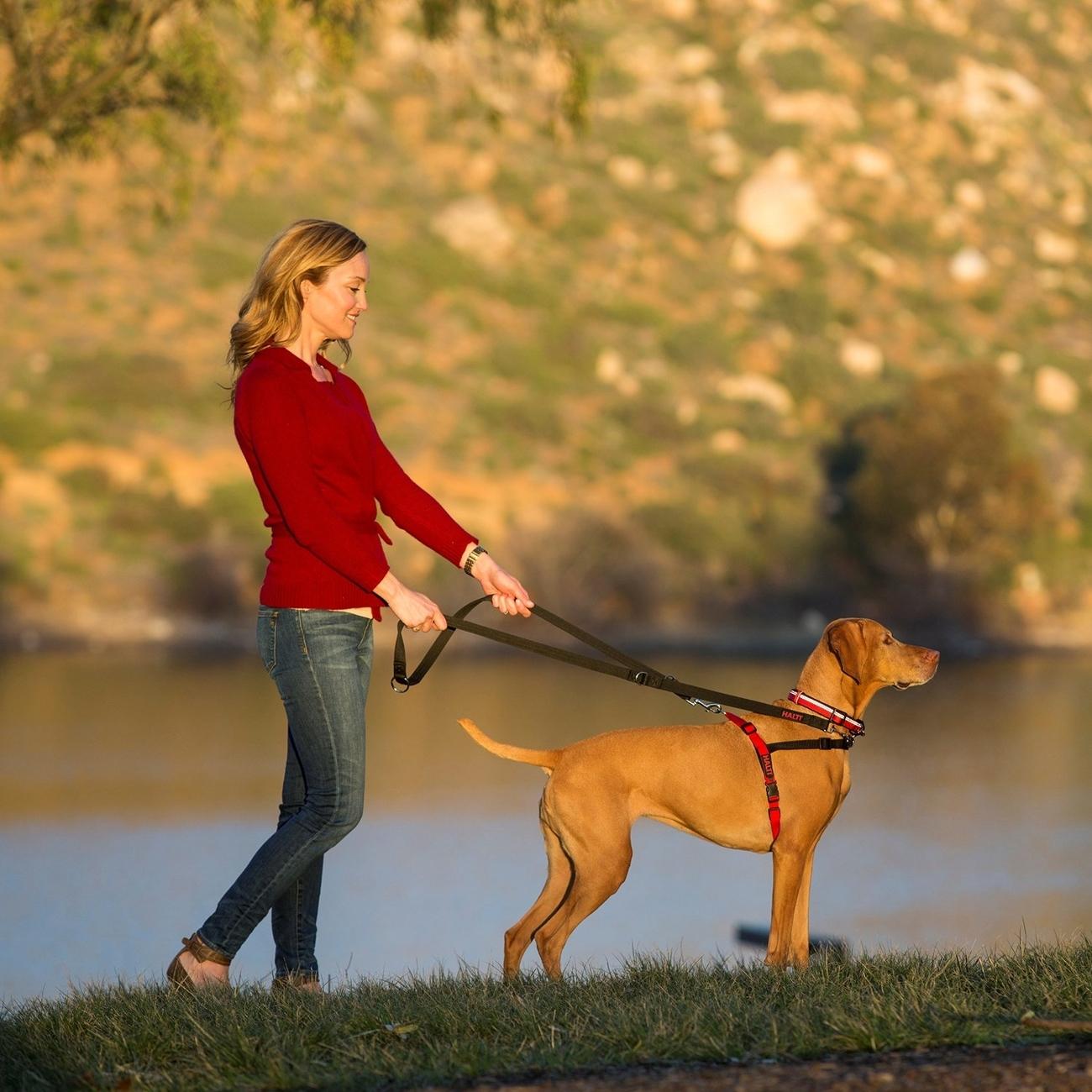 Company of Animals HALTI Harness Ausbildungsgeschirr für Hunde, Bild 11