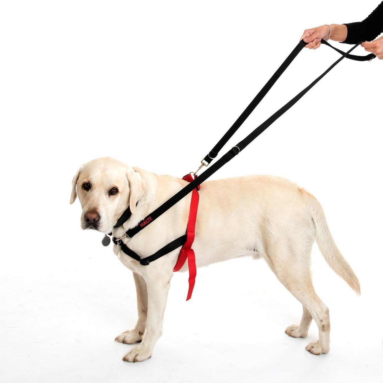 Company of Animals Halti Leine Training Lead, Bild 6