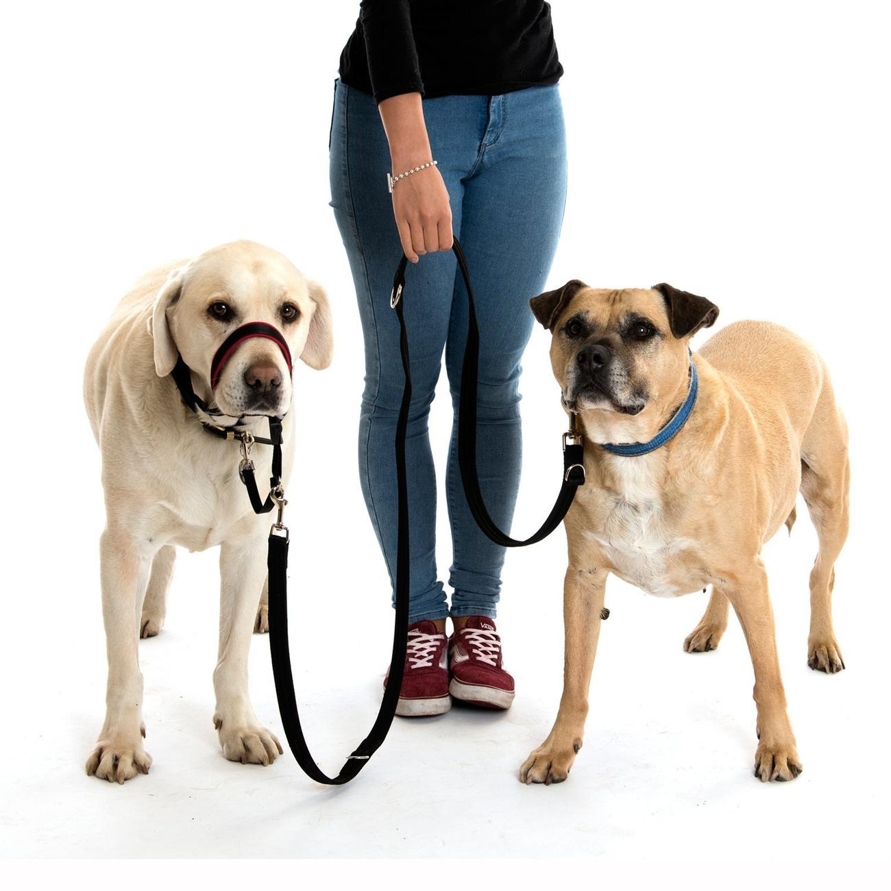 Company of Animals Halti Leine Training Lead, Bild 7
