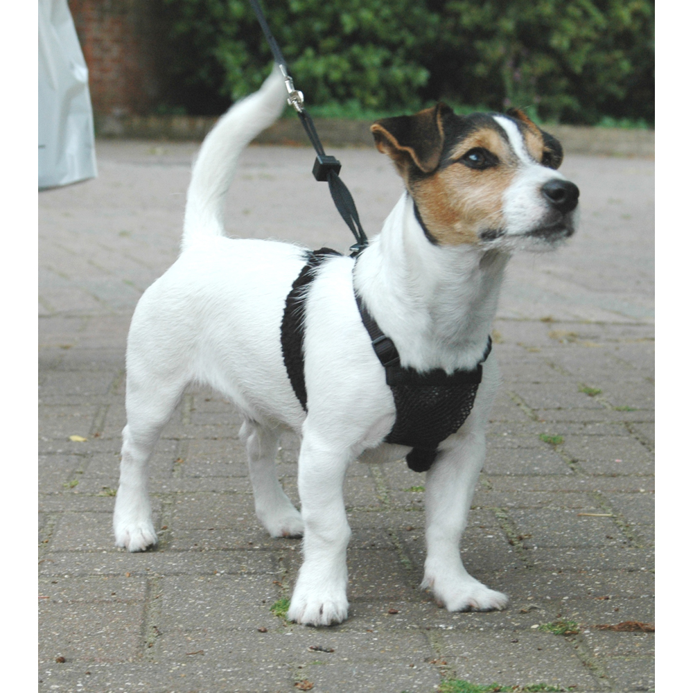 Company of Animals HALTI No-Pull Geschirr, Bild 10