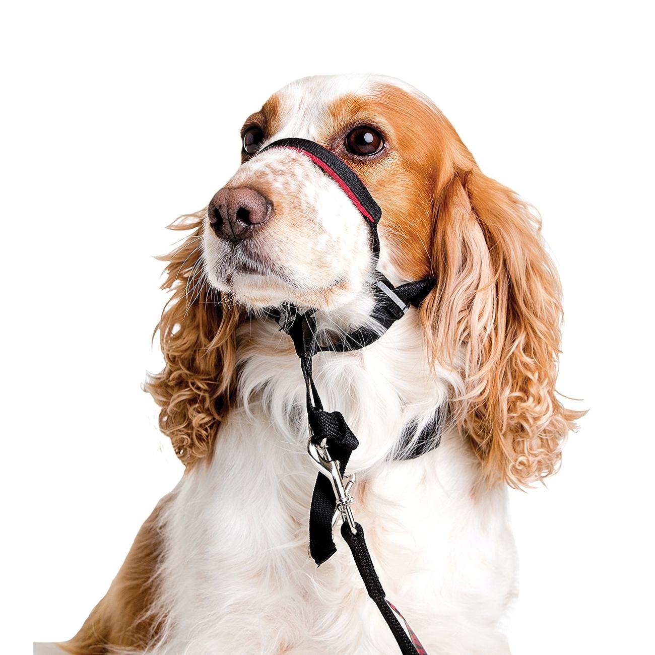 Company of Animals Halti OPTIFIT Halsband