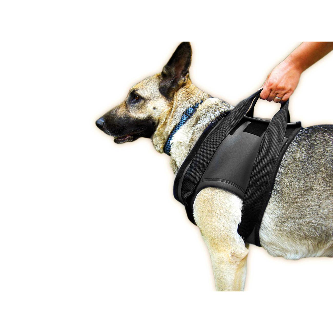 Julius K9 Hunde Gehhilfe für Vorderläufe, M: Brust 47-73 cm