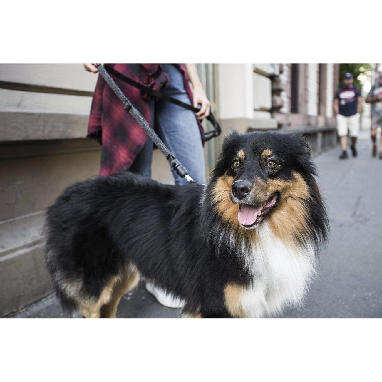 GoLeyGo Hunde Rundleine 2.0 Rope, Bild 16