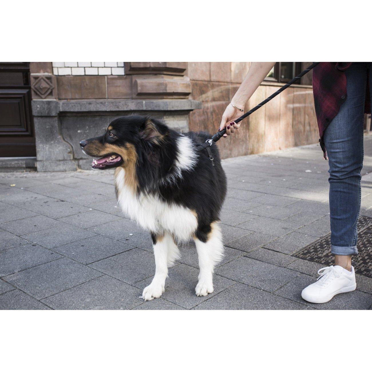 GoLeyGo Hunde Rundleine 2.0 Rope, Bild 17