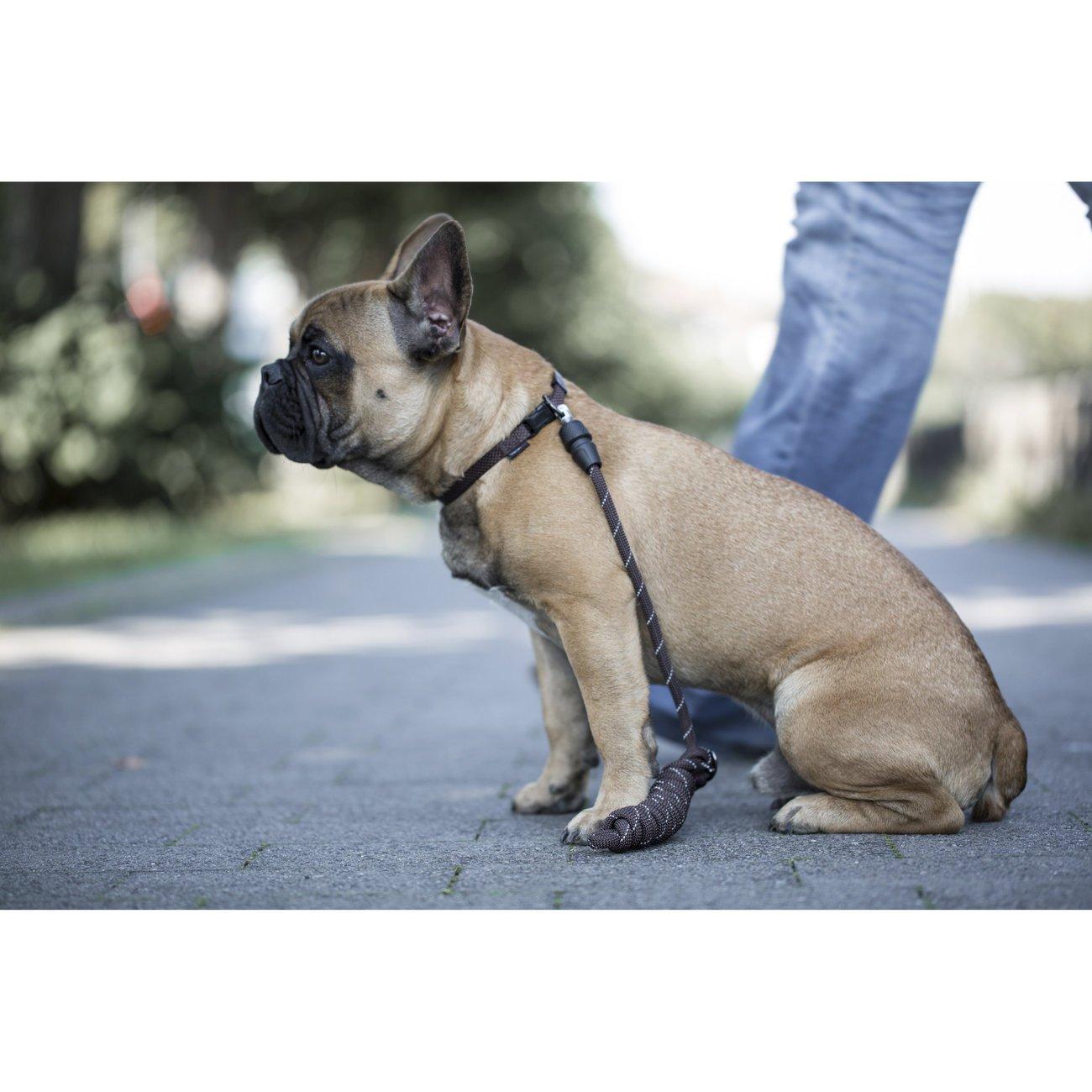 GoLeyGo Hunde Rundleine 2.0 Rope, Bild 20