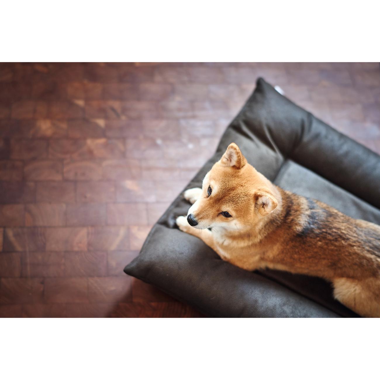 Hunter Hundebett Hundematte Bologna Kunstleder 67189, Bild 6