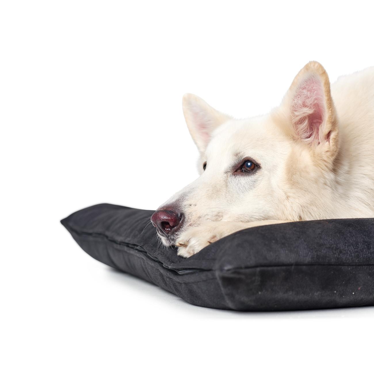 Hunter Hundebett Hundematte Bologna Kunstleder 67189, Bild 13
