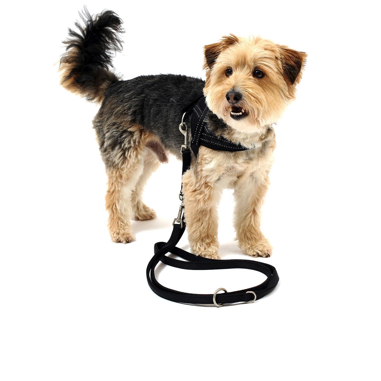 Wolters Hundegeschirr Soft & Safe reflektierend, Bild 8