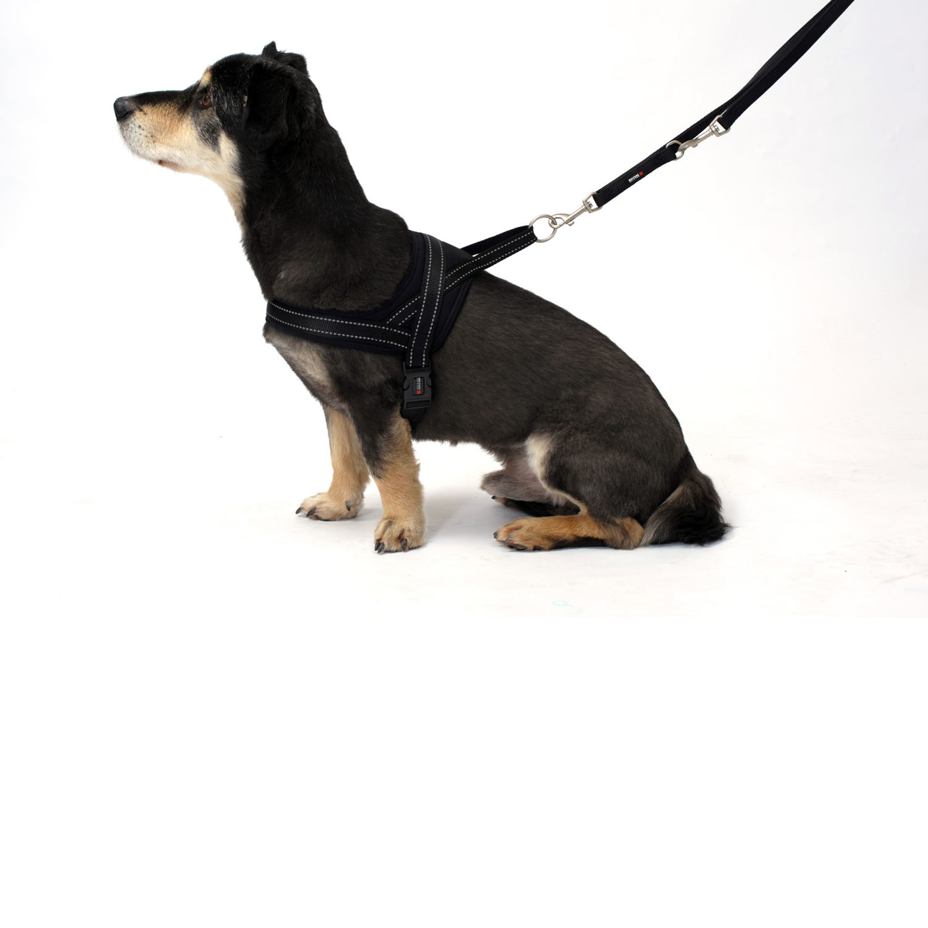 Wolters Hundegeschirr Soft & Safe reflektierend, Bild 9