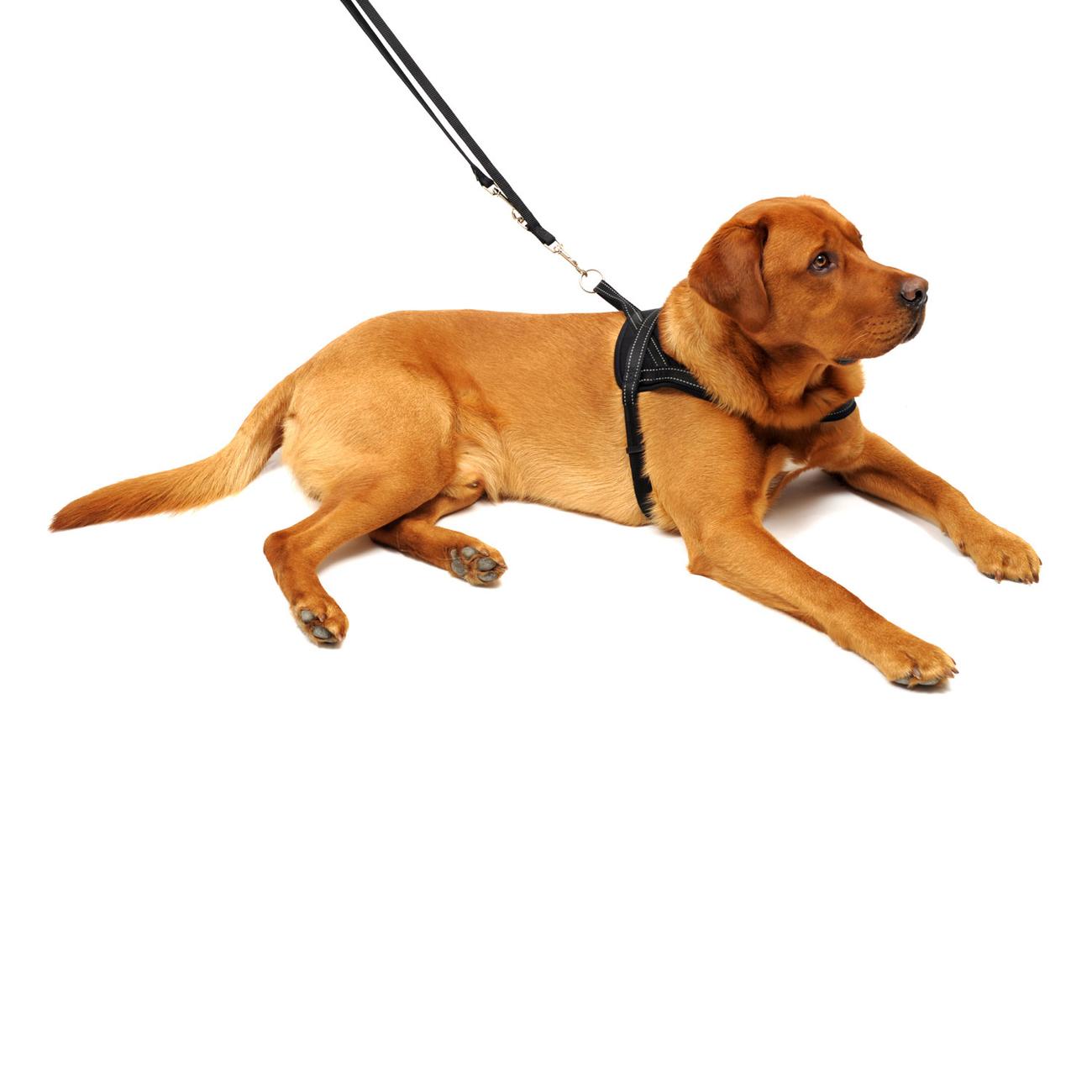 Wolters Hundegeschirr Soft & Safe reflektierend, Bild 10