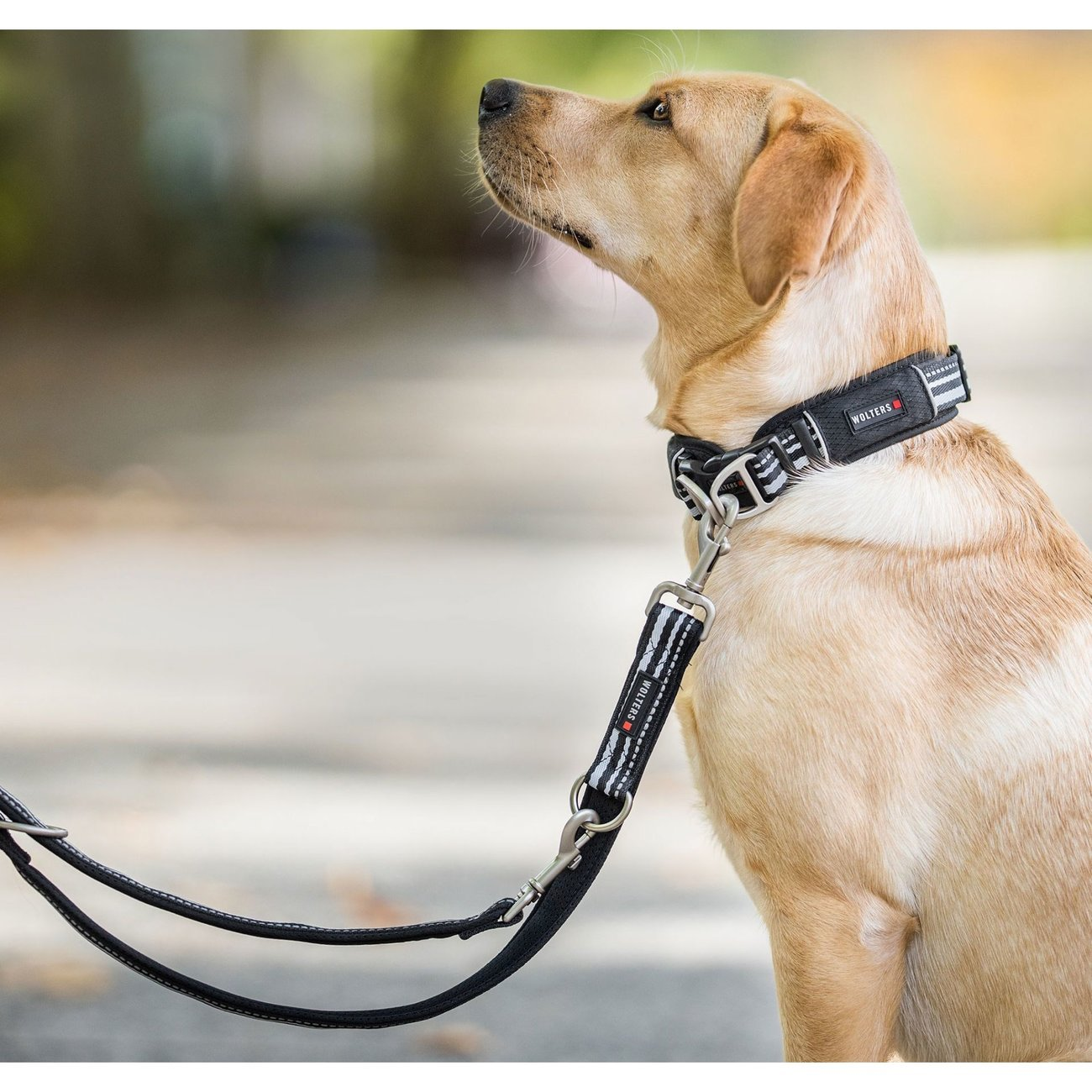 Wolters Hundehalsband Active Pro, Bild 2