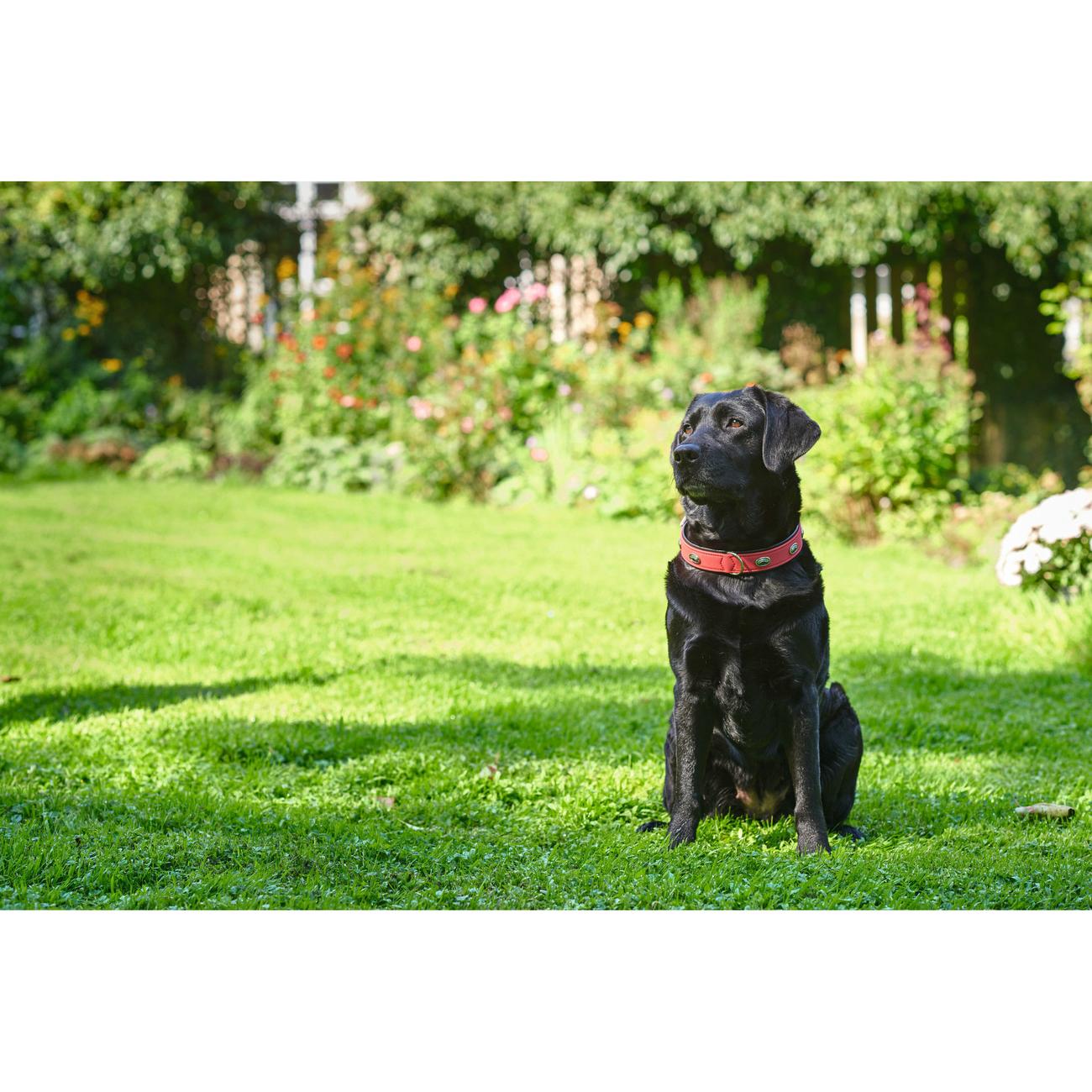 Hunter Hundehalsband Softie Stone 47568, Bild 8