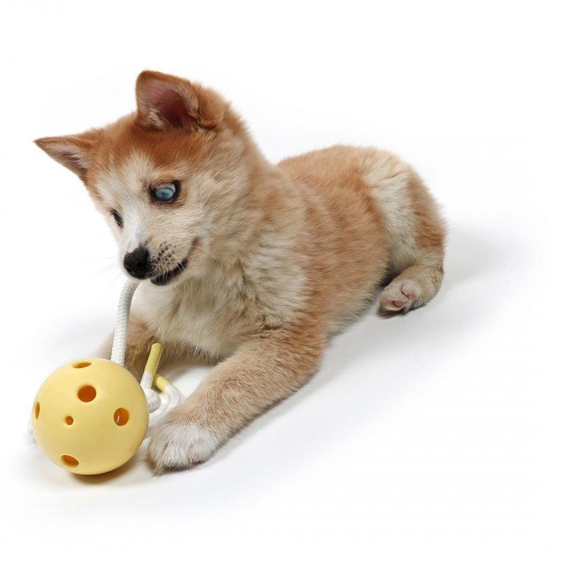 Petit Hundekauspielzeug Milo für die Zahnreinigung Preview Image