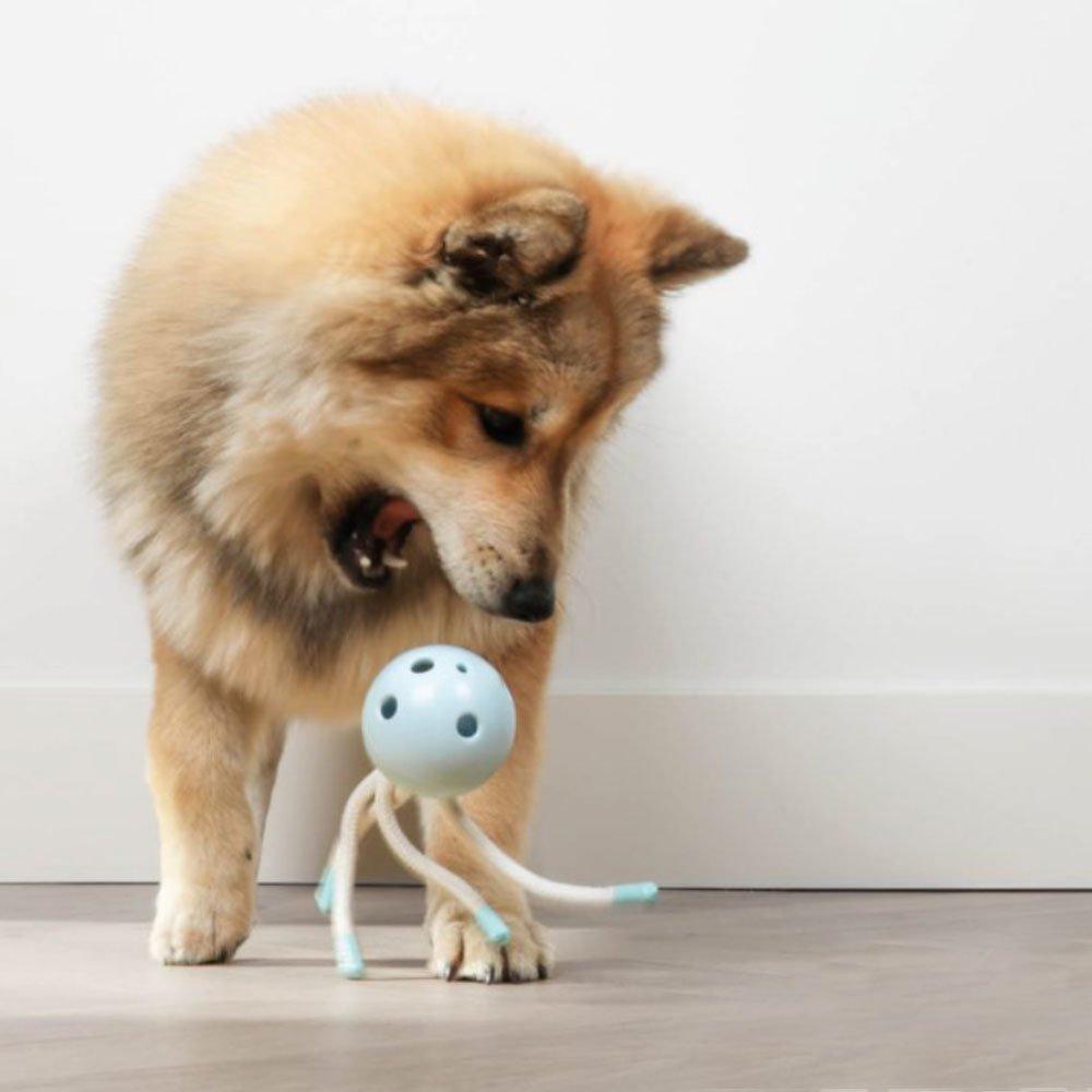 Petit Hundekauspielzeug Milo für die Zahnreinigung, Bild 3
