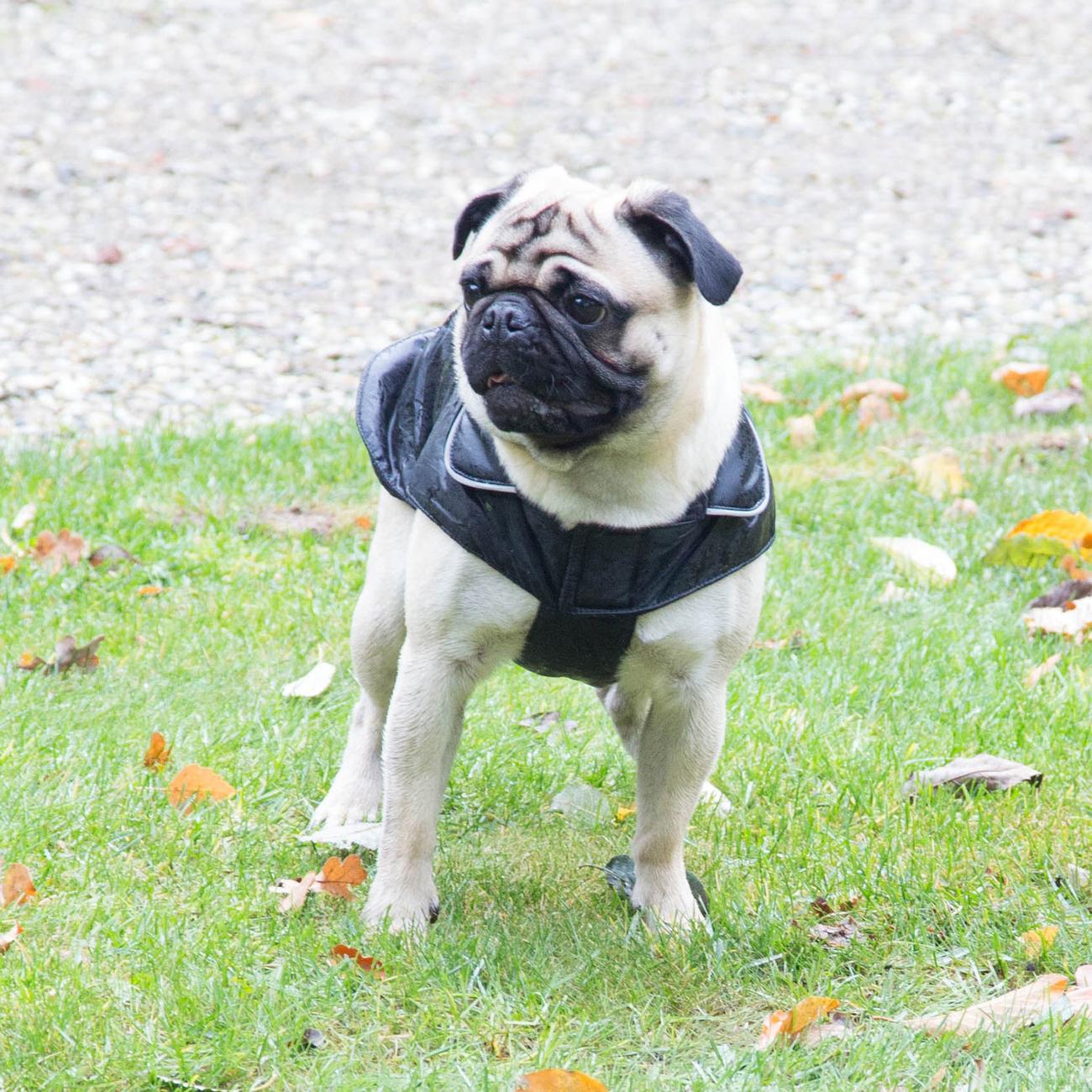Wolters Hundemantel Outdoorjacke Jack für Mops & Co, Bild 4