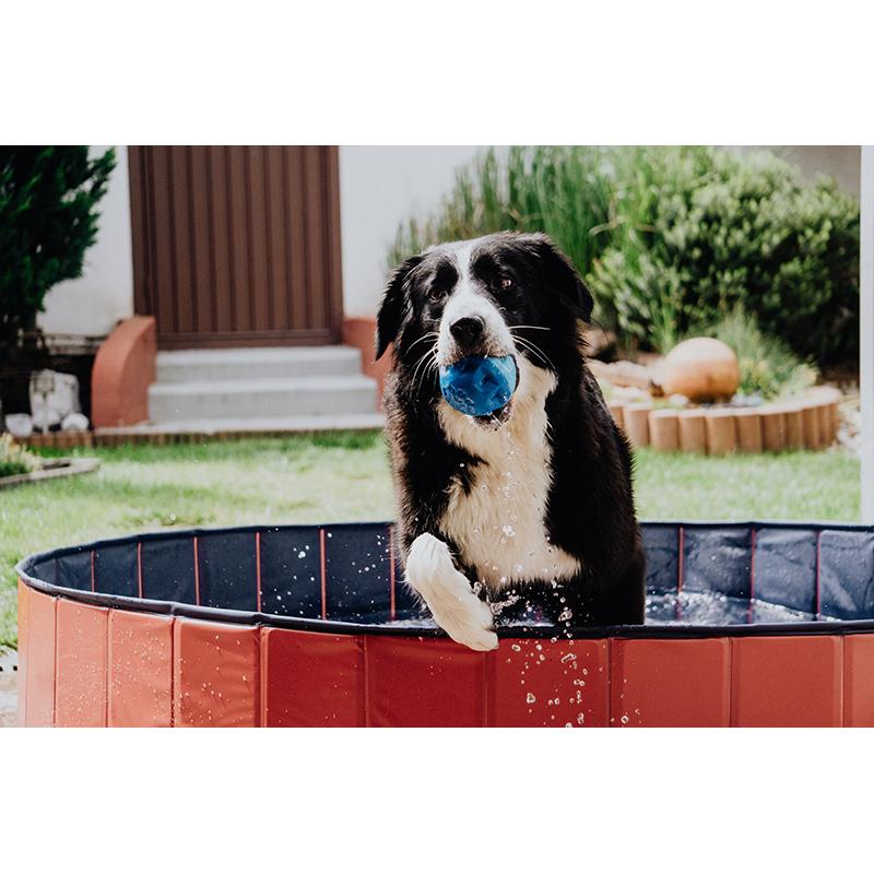 Karlie Hundepool Doggypool, Bild 4