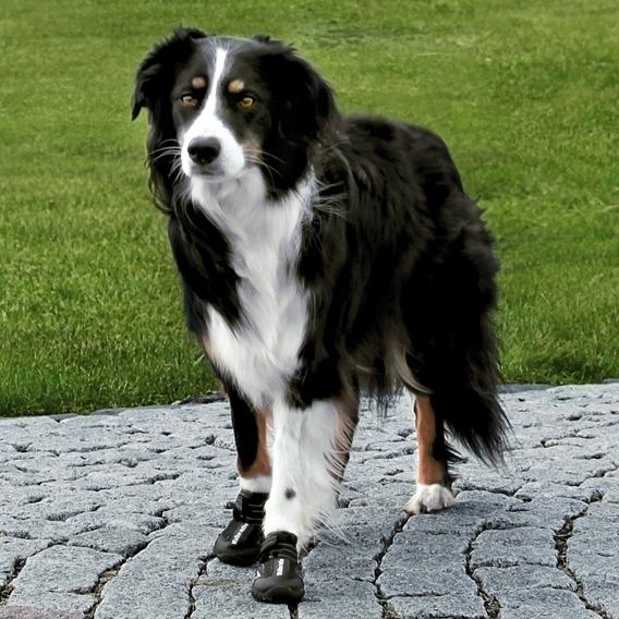TRIXIE Hundeschuhe Pfotenschutz Walker Active 19460, Bild 3