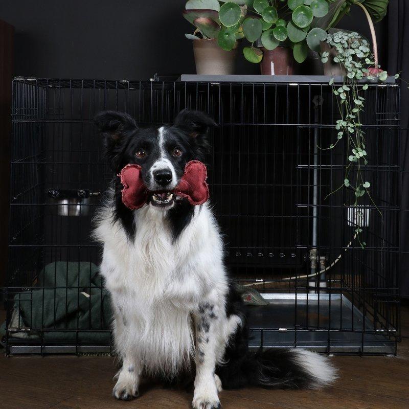 DREAM and DARE Hundespielzeug James Knochen, Bild 5