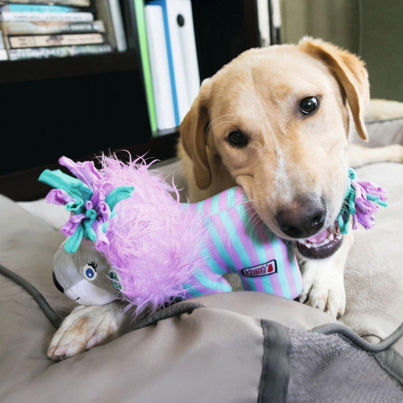 KONG Hundespielzeug Knots Carnival, Bild 4