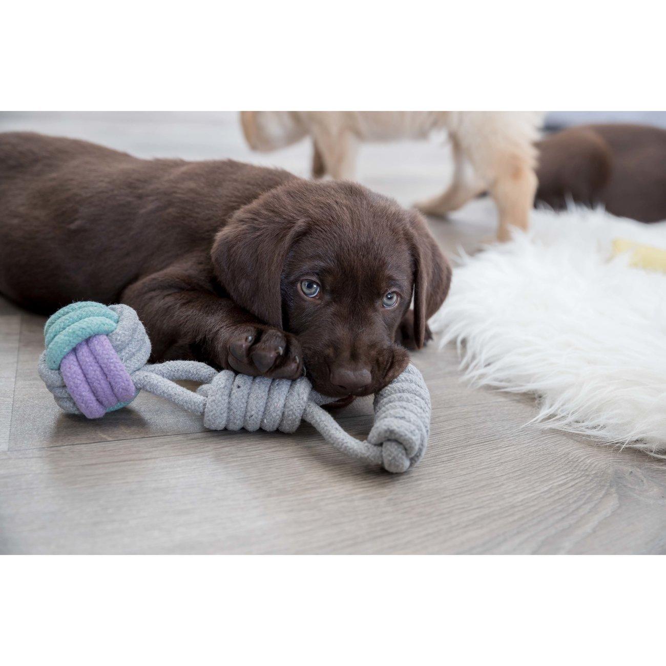 TRIXIE Hundespielzeug Spieltau mit Handschlaufe 32813, Bild 2