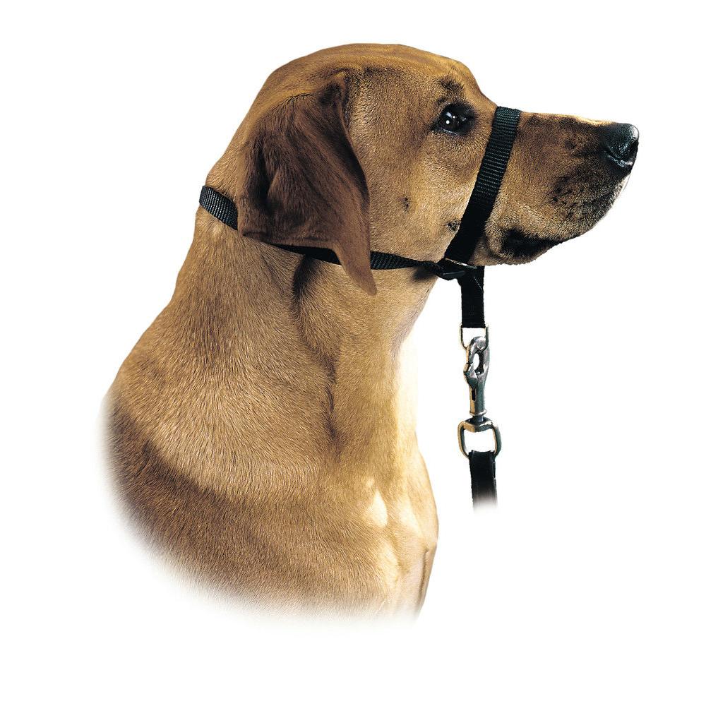 Hunter Ausbildungsgeschirr Follow me, XL/4 2,0 cm e.g. Rottweiler