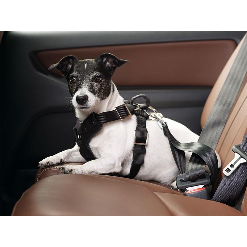 Hunter Autosicherheitsgeschirr Bodyguard Classic 30203, Bild 2