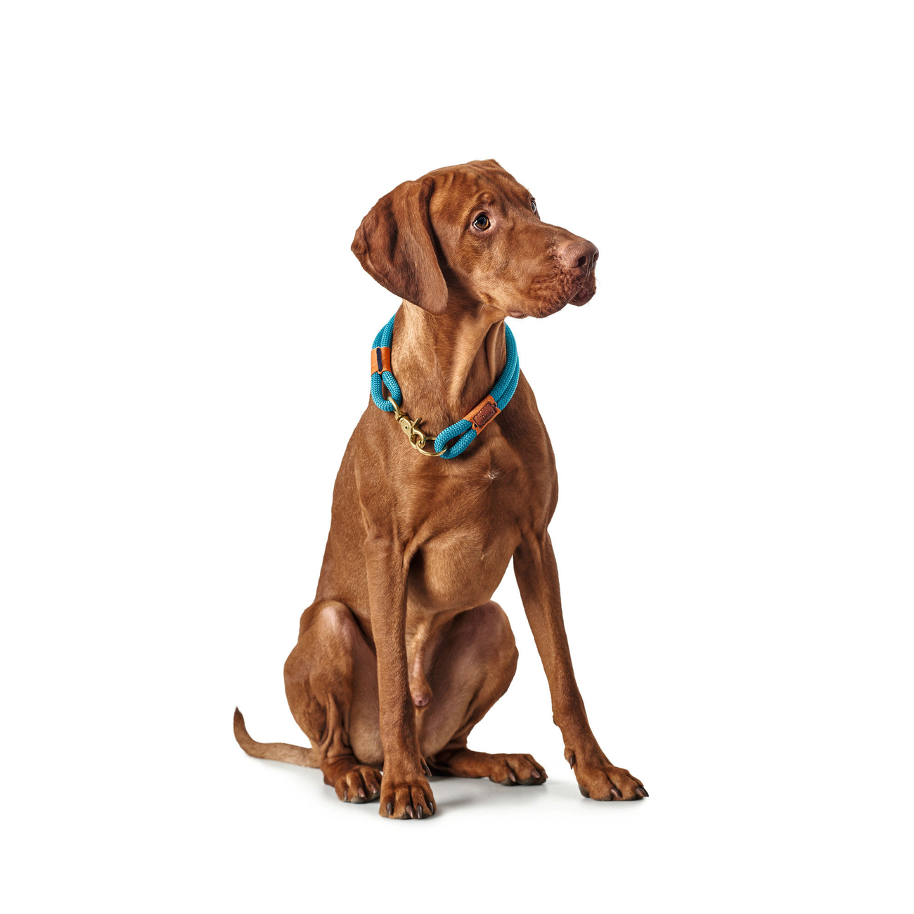 Hunter Halsung Halsband Oss für Hunde 66989, Bild 7