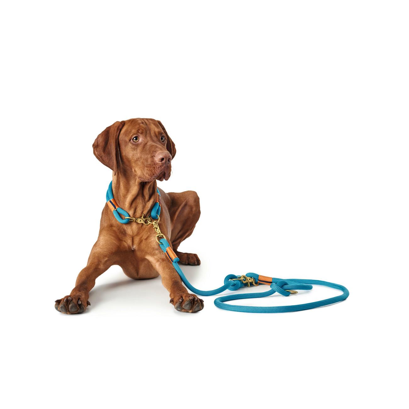 Hunter Halsung Halsband Oss für Hunde 66989, Bild 8