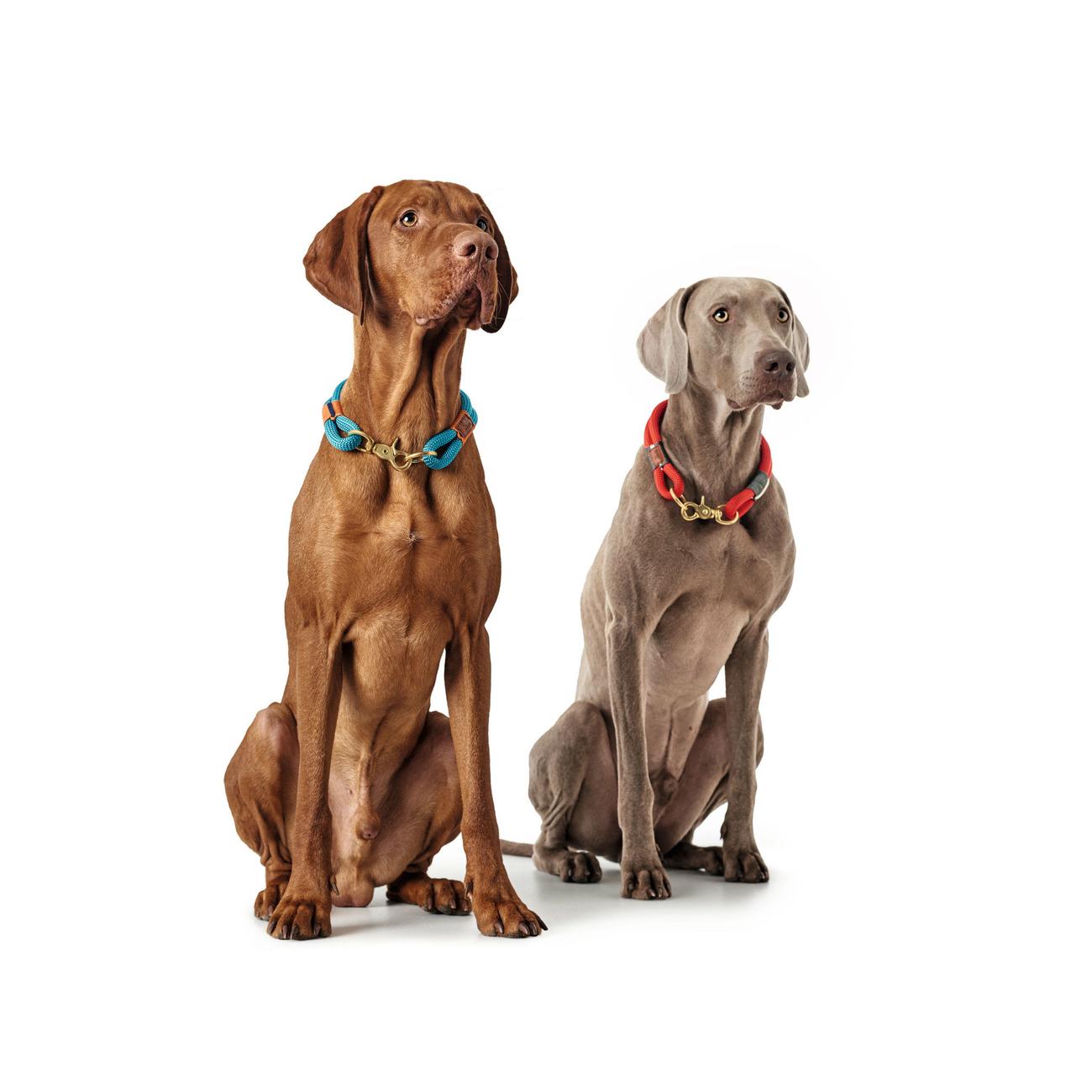 Hunter Halsung Halsband Oss für Hunde 66989, Bild 6