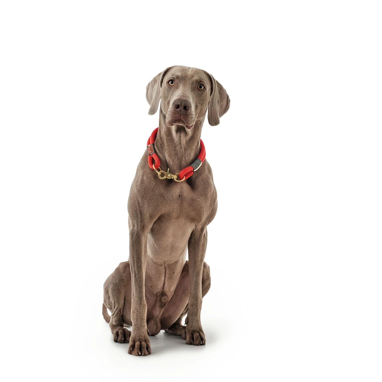 Hunter Halsung Halsband Oss für Hunde 66989, Bild 9