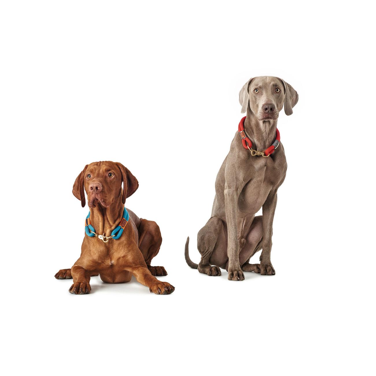 Hunter Halsung Halsband Oss für Hunde 66989, Bild 14