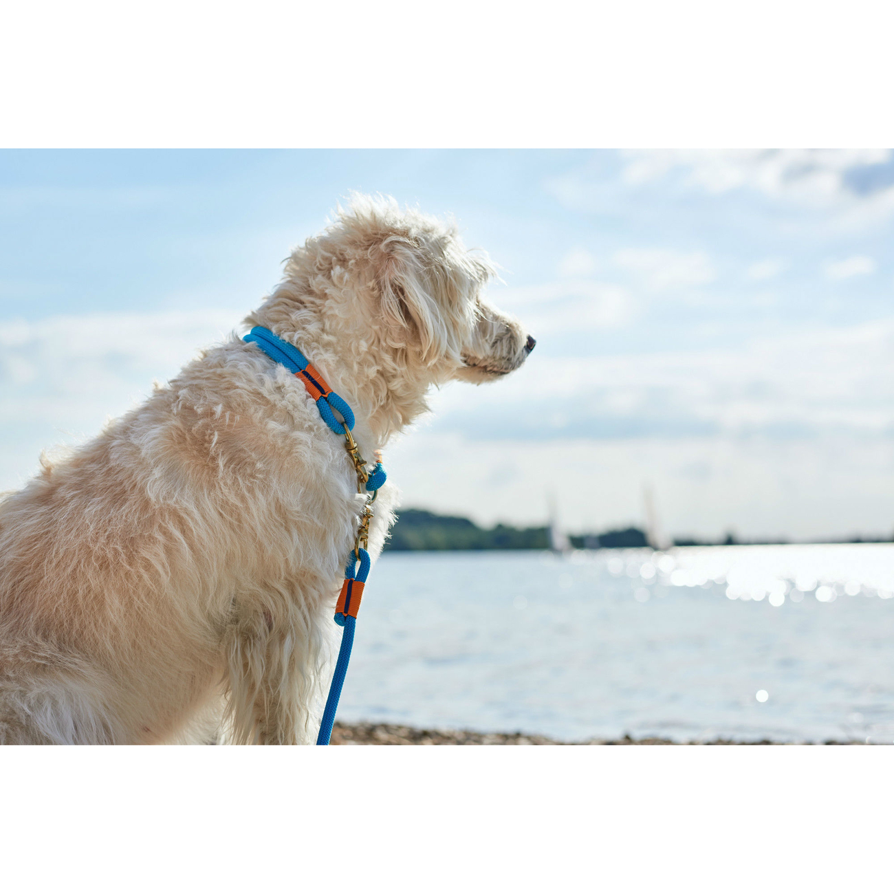 Hunter Halsung Halsband Oss für Hunde 66989, Bild 15
