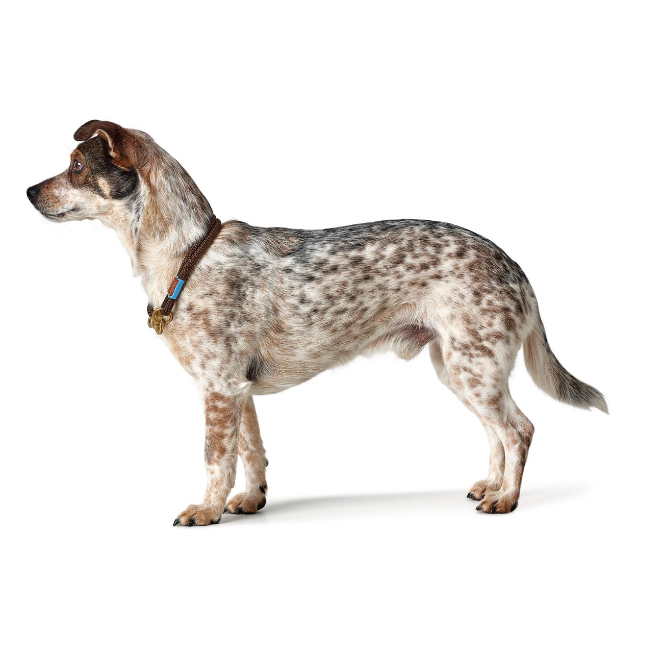 Hunter Halsung Halsband Oss für Hunde 66989, Bild 21