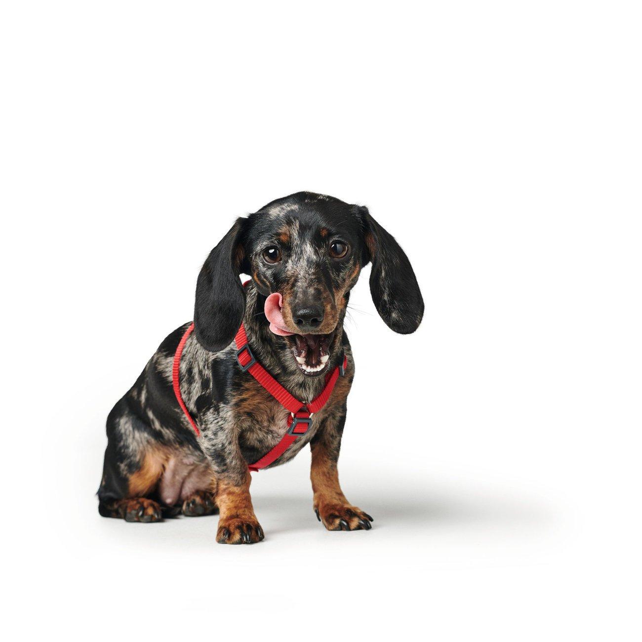 Hunter Hundegeschirr London Vario Rapid 68071, Bild 29