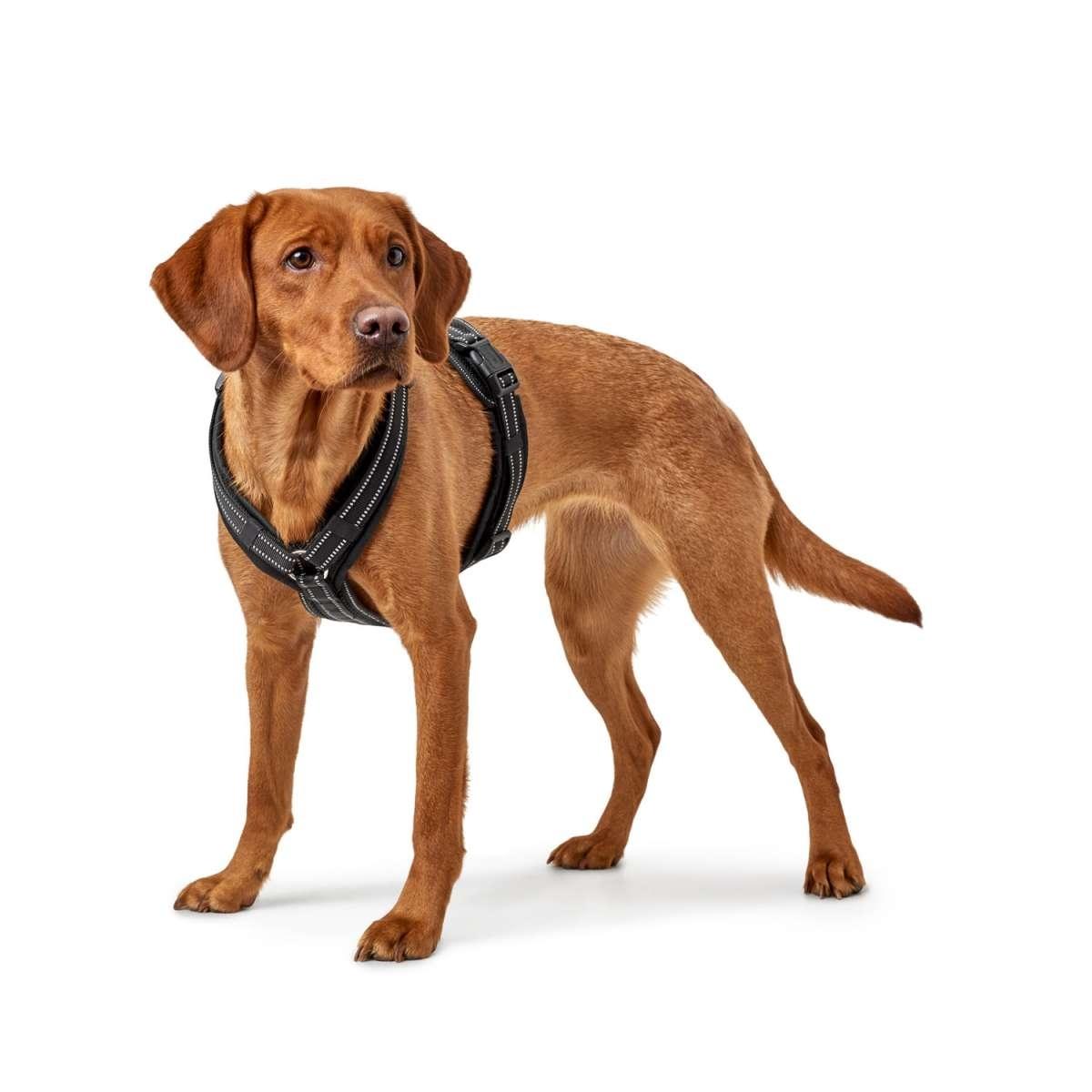 Hunter Hundegeschirr Maldon 66792, Bild 2