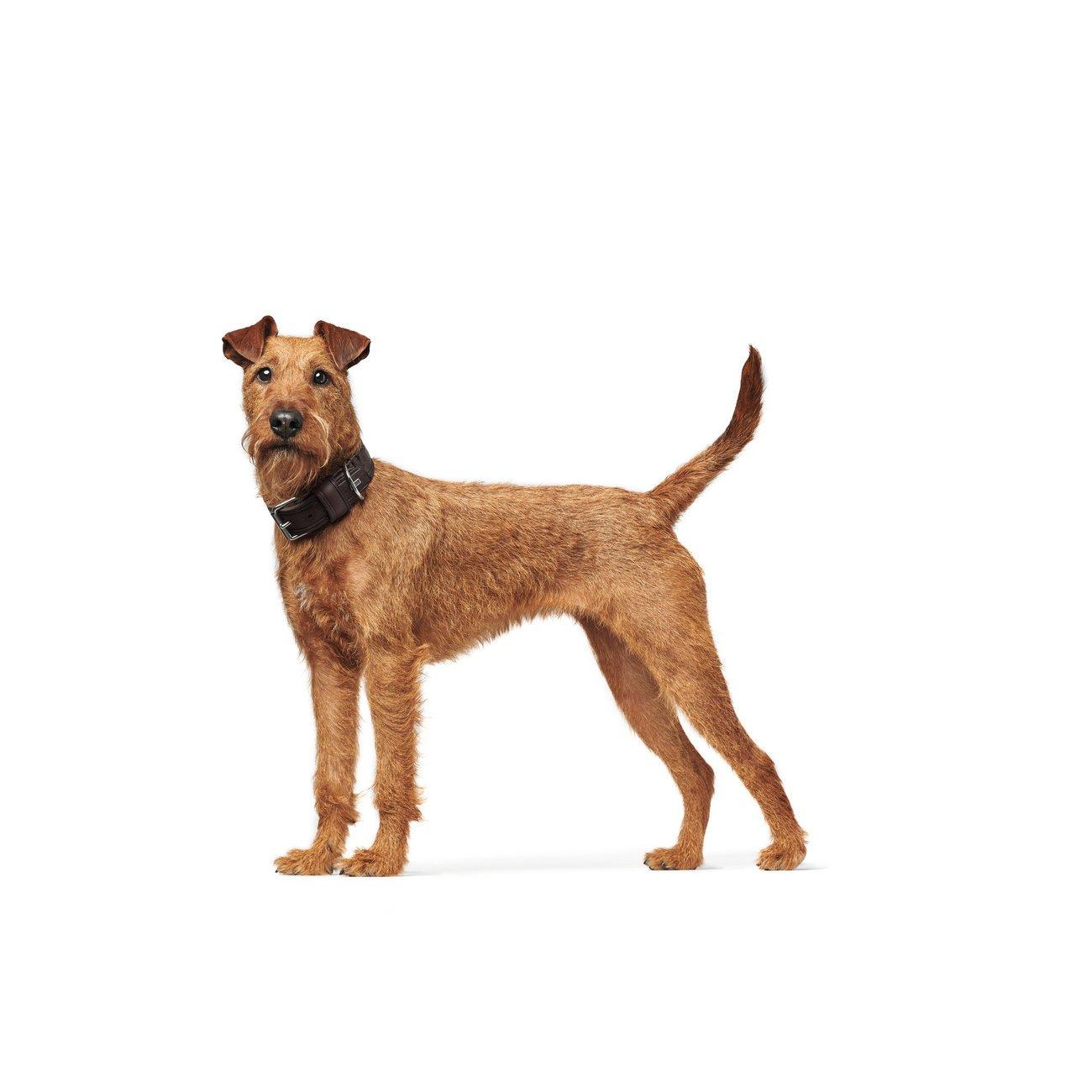 Hunter Hundehalsband Aalborg Rustica 68503, Bild 31
