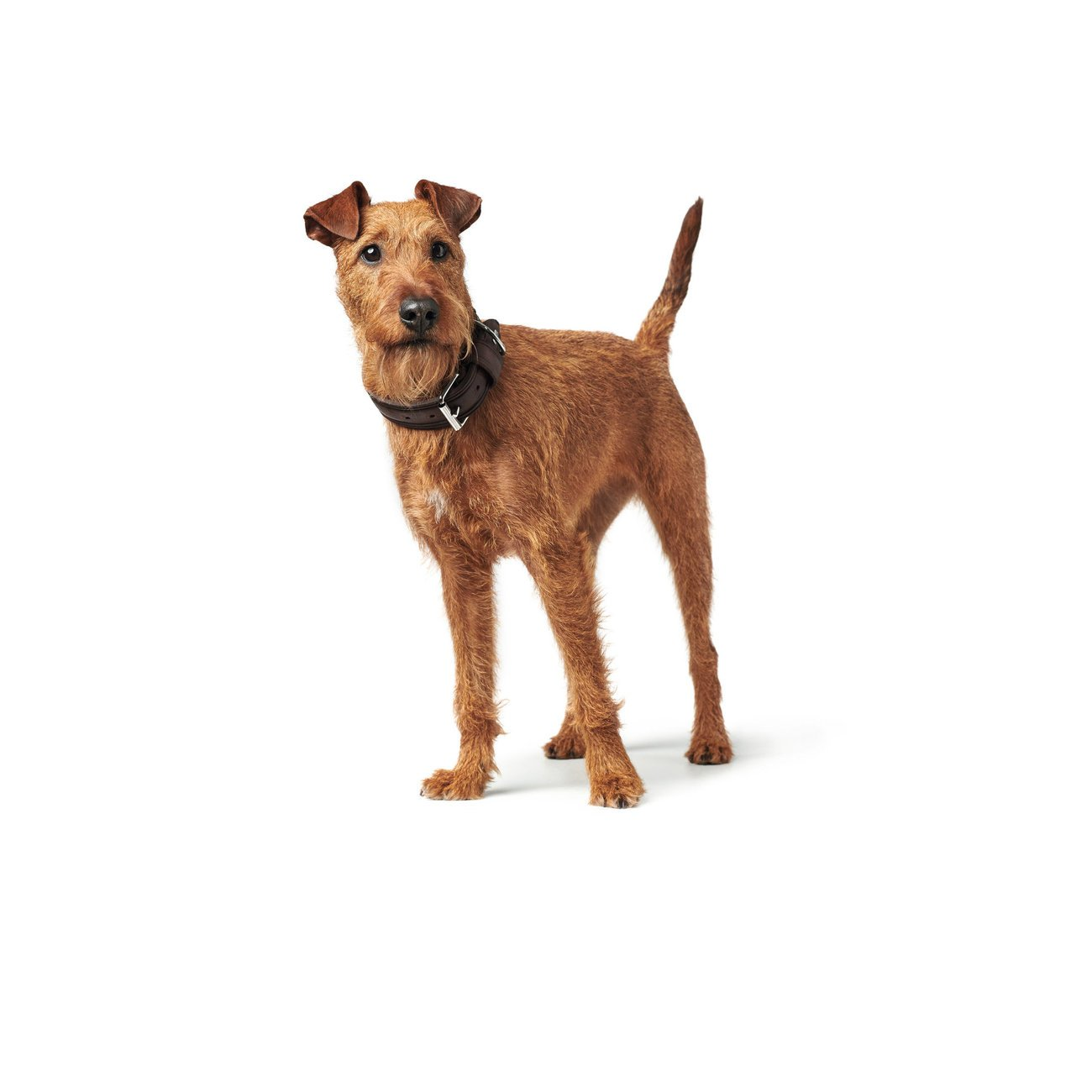 Hunter Hundehalsband Aalborg Rustica 68503, Bild 35