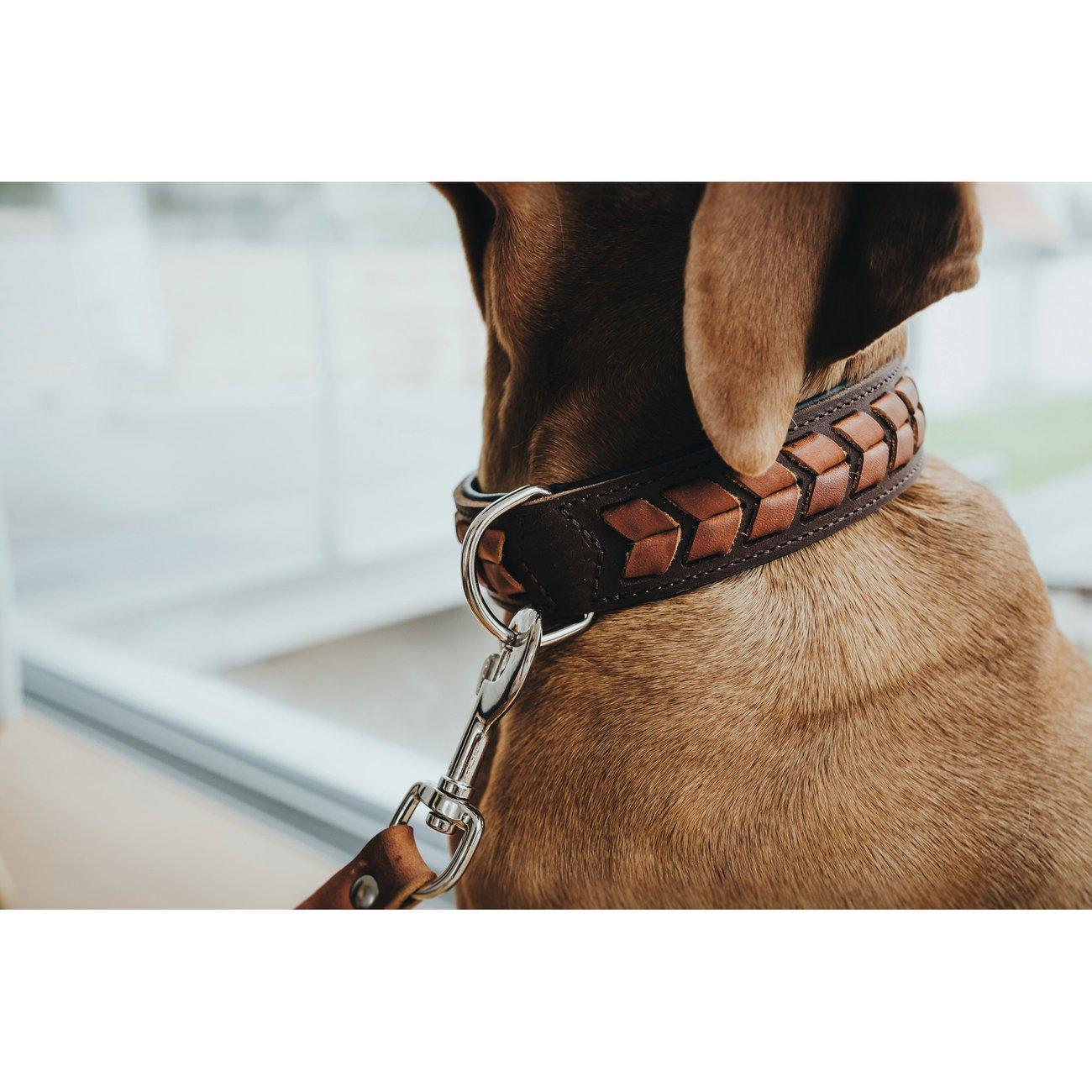 Hunter Hundehalsband El Paso 68555, Bild 4