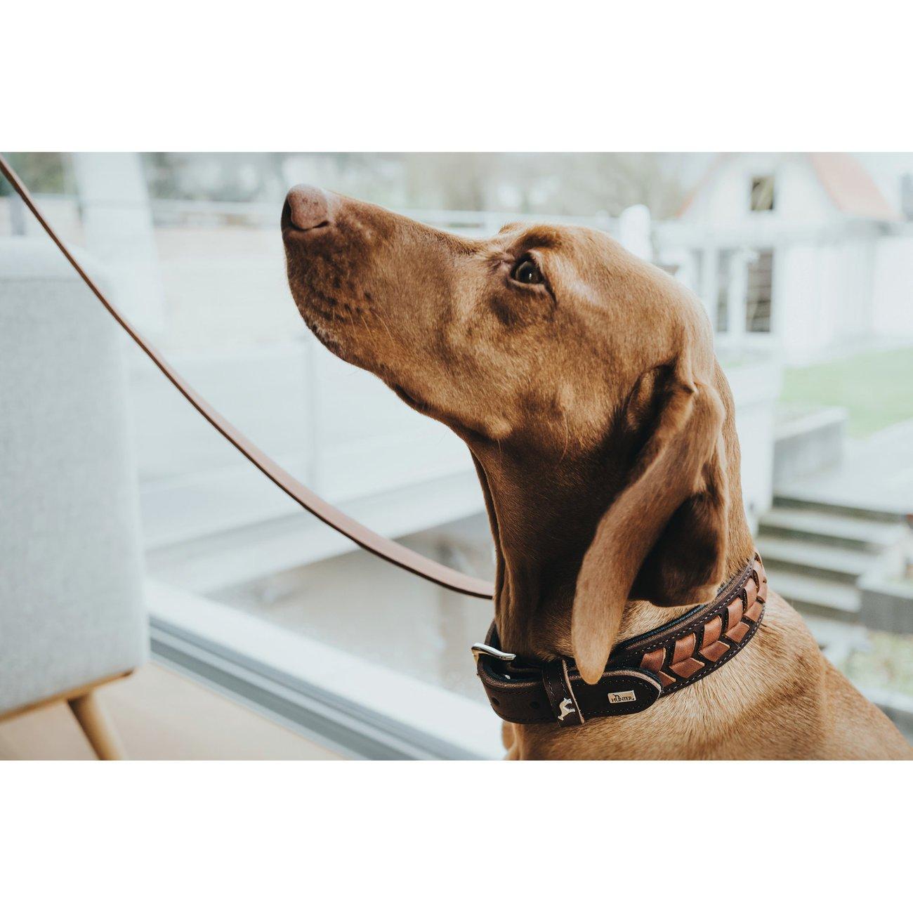 Hunter Hundehalsband El Paso 68555, Bild 5