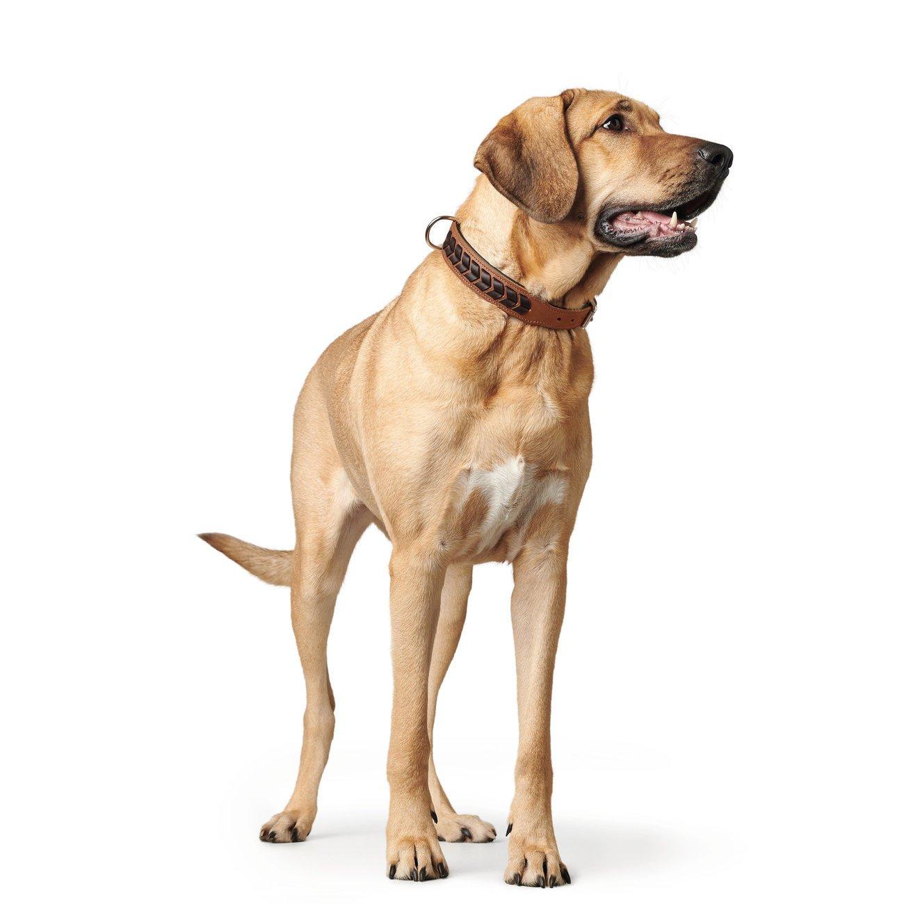 Hunter Hundehalsband El Paso 68555, Bild 7
