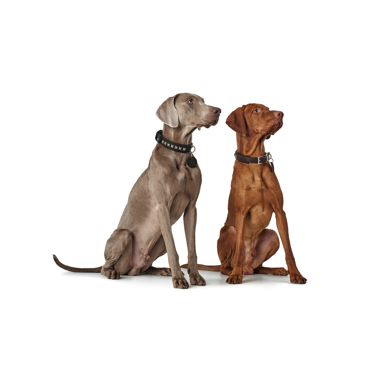 Hunter Hundehalsband Larvik Style Comfort 66841, Bild 3