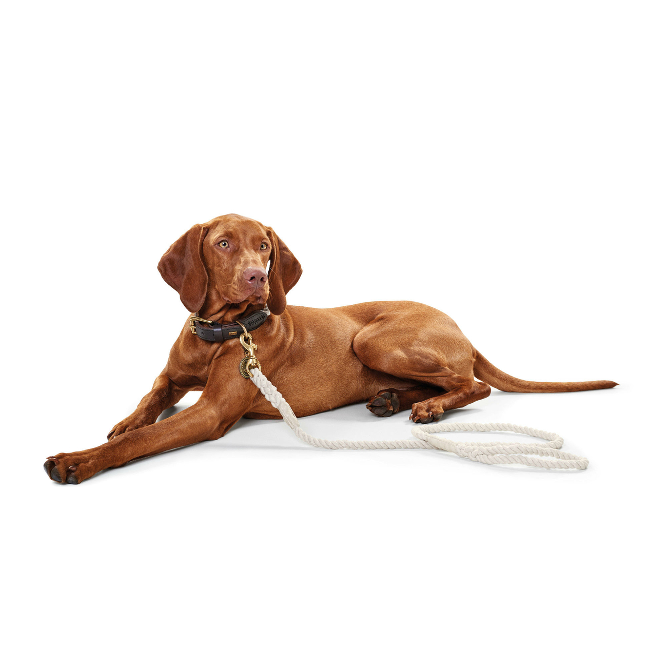 Hunter Hundehalsband List Tau 64715, Bild 9