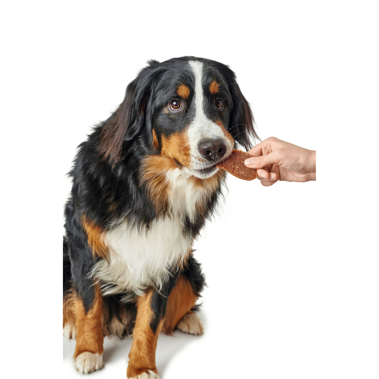 Hunter Hundesnack Maxis 65784, Bild 7