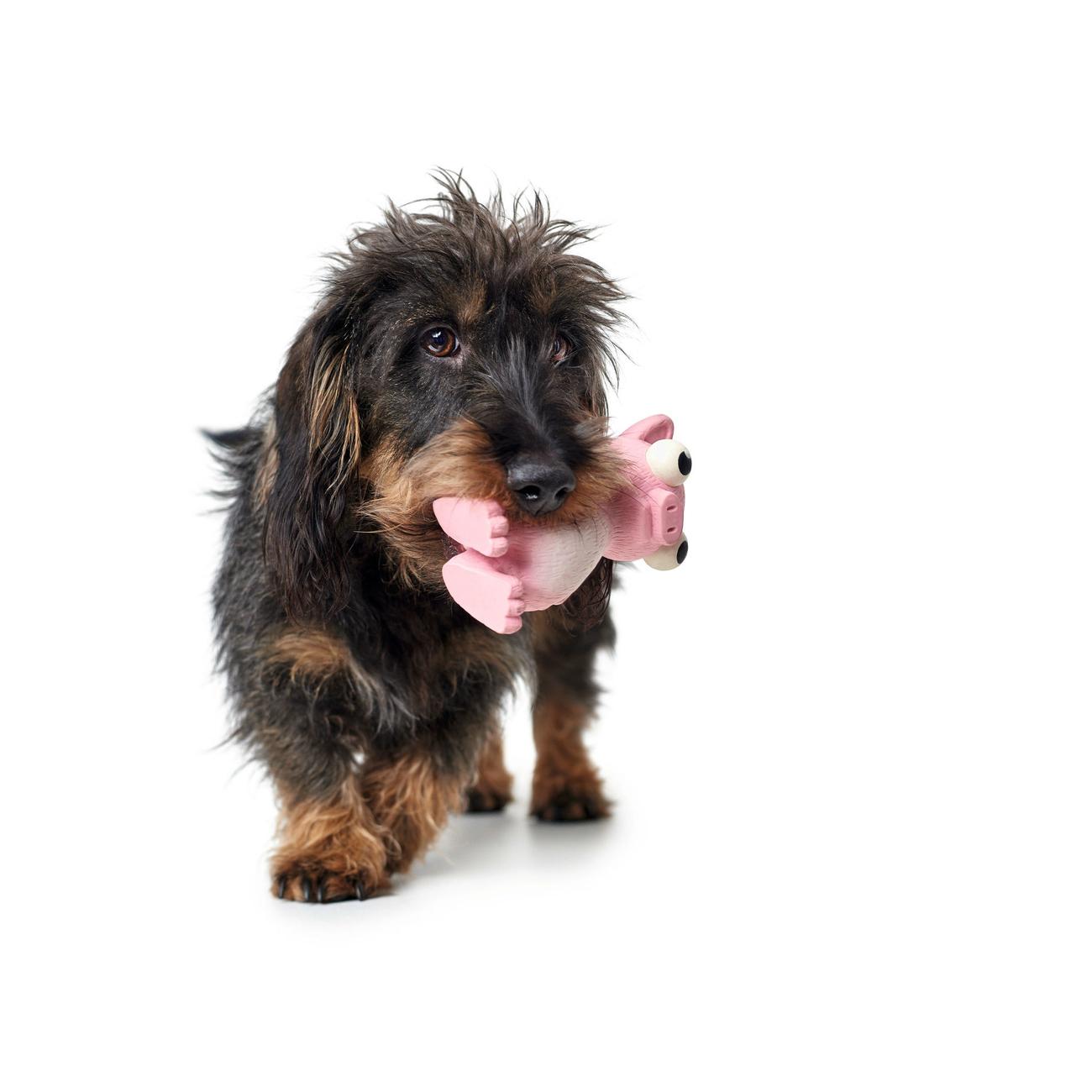 Hunter Hundespielzeug Auckland 65597, Bild 4
