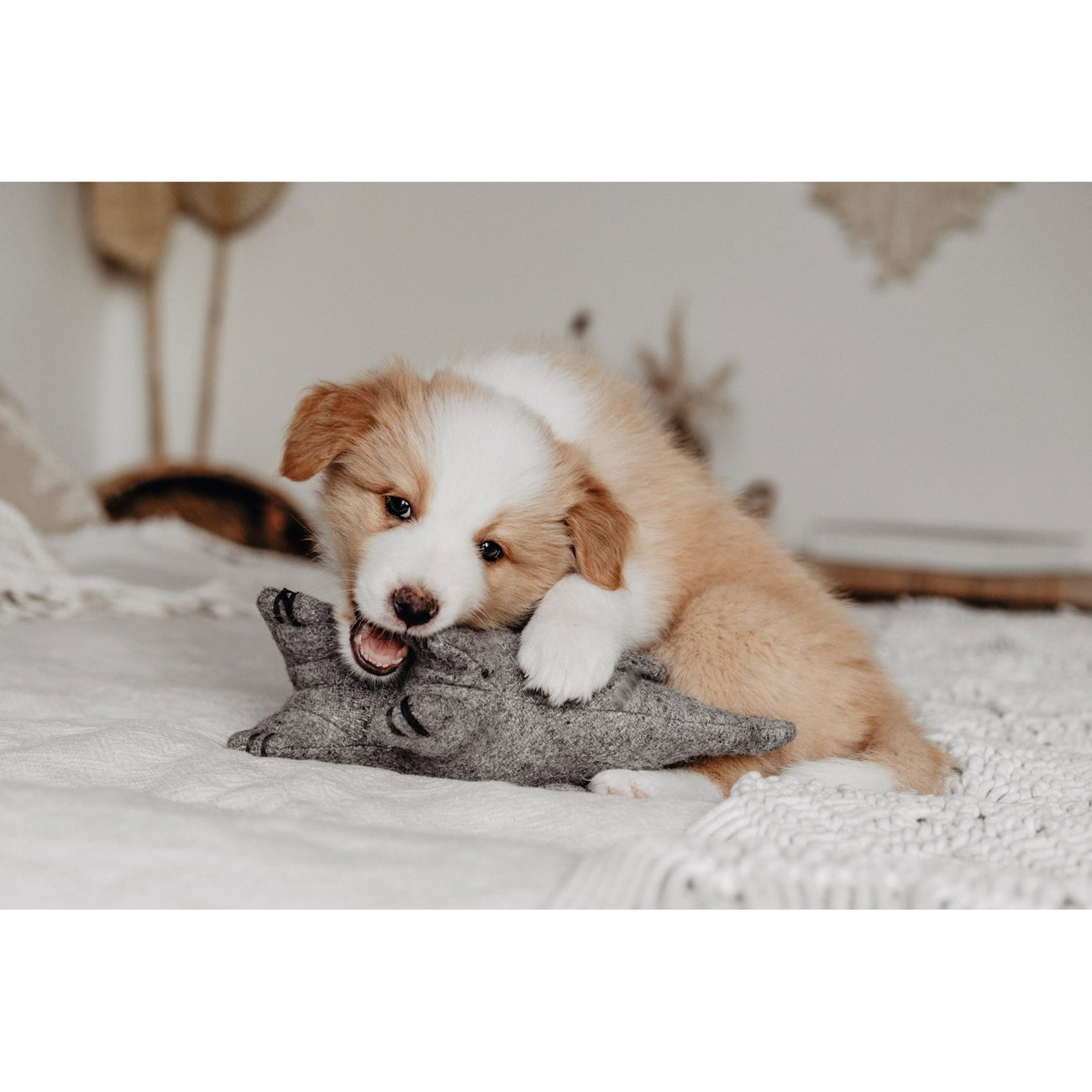 Hunter Hundespielzeug Eiby 68642, Bild 5