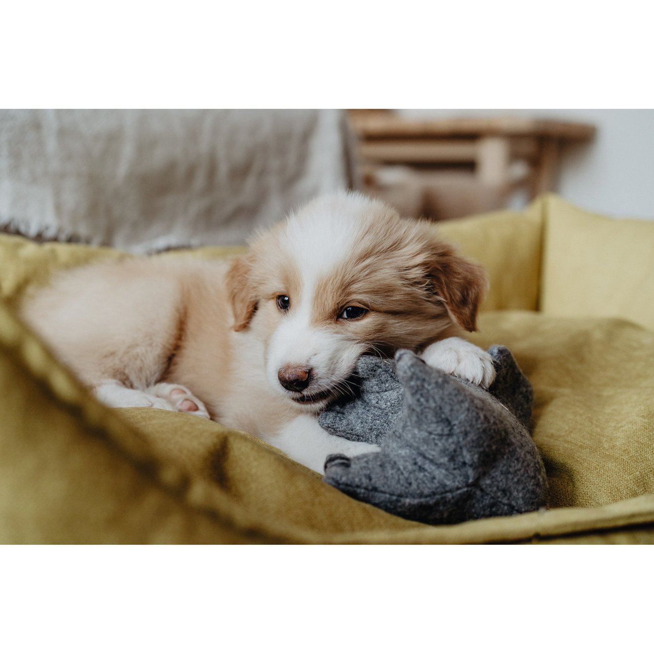 Hunter Hundespielzeug Eiby 68642, Bild 6