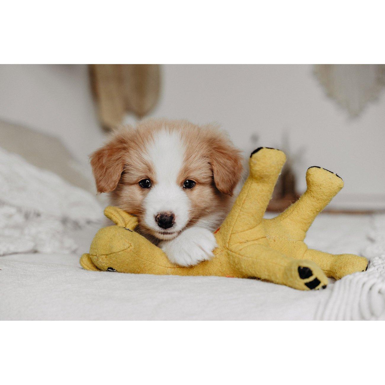 Hunter Hundespielzeug Eiby 68642, Bild 2