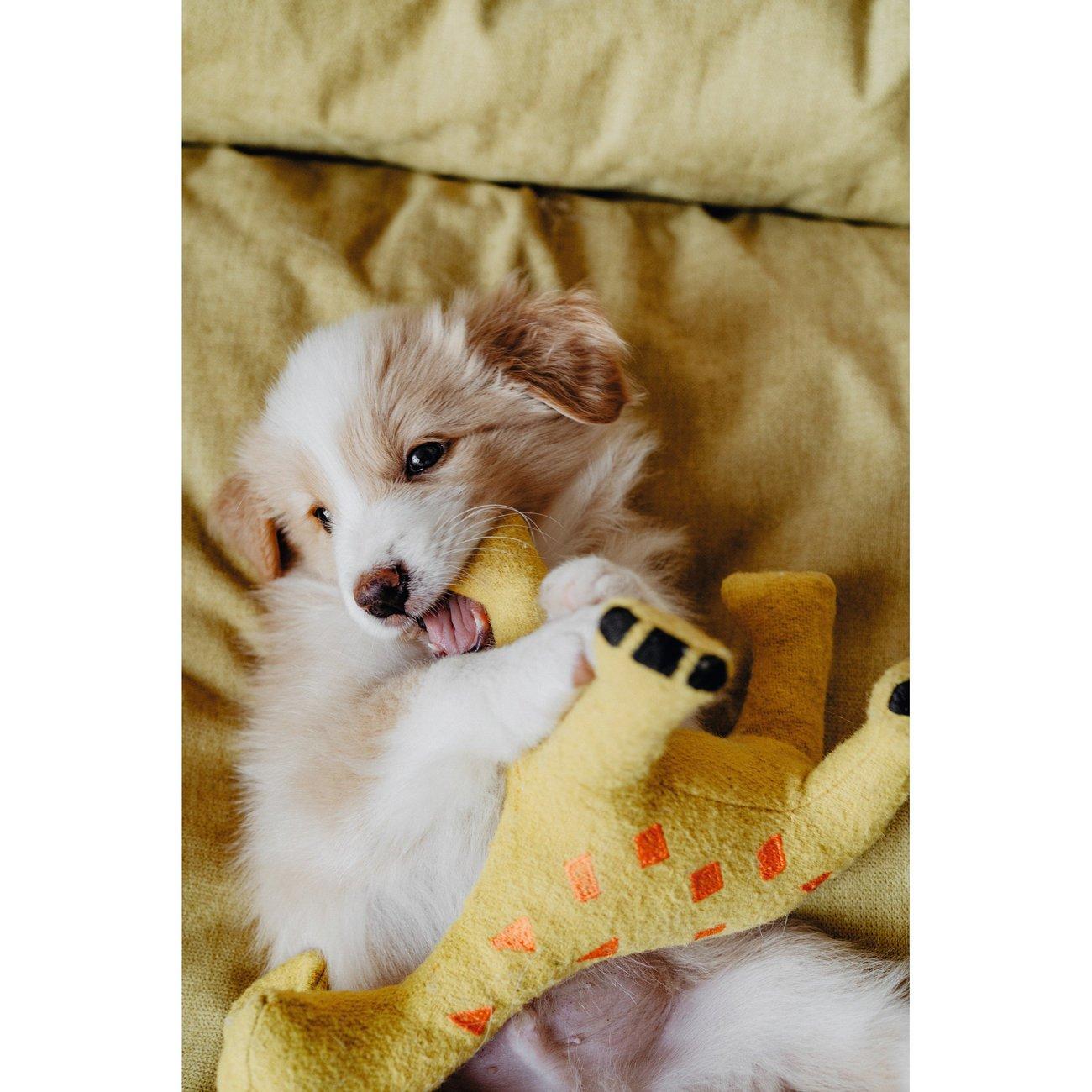 Hunter Hundespielzeug Eiby 68642, Bild 8