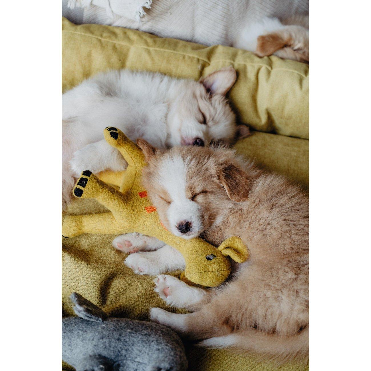 Hunter Hundespielzeug Eiby 68642, Bild 11